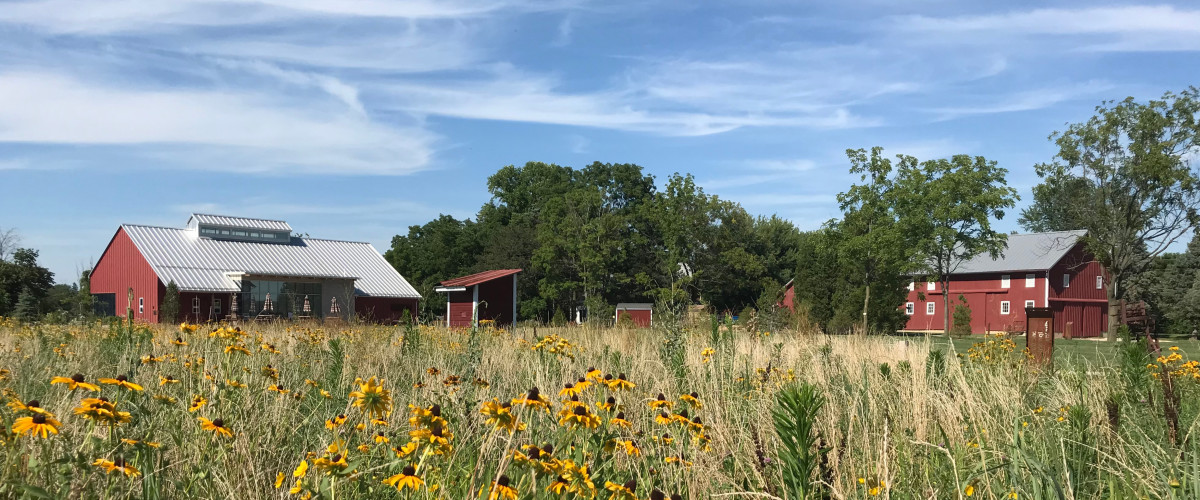 Flower field with two red barns in the background
